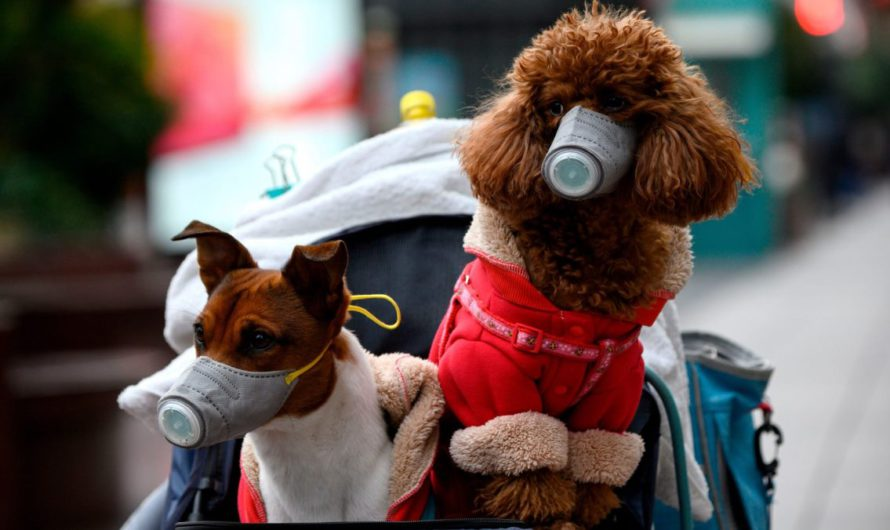 Могут ли домашние животные заразиться коронавирусом